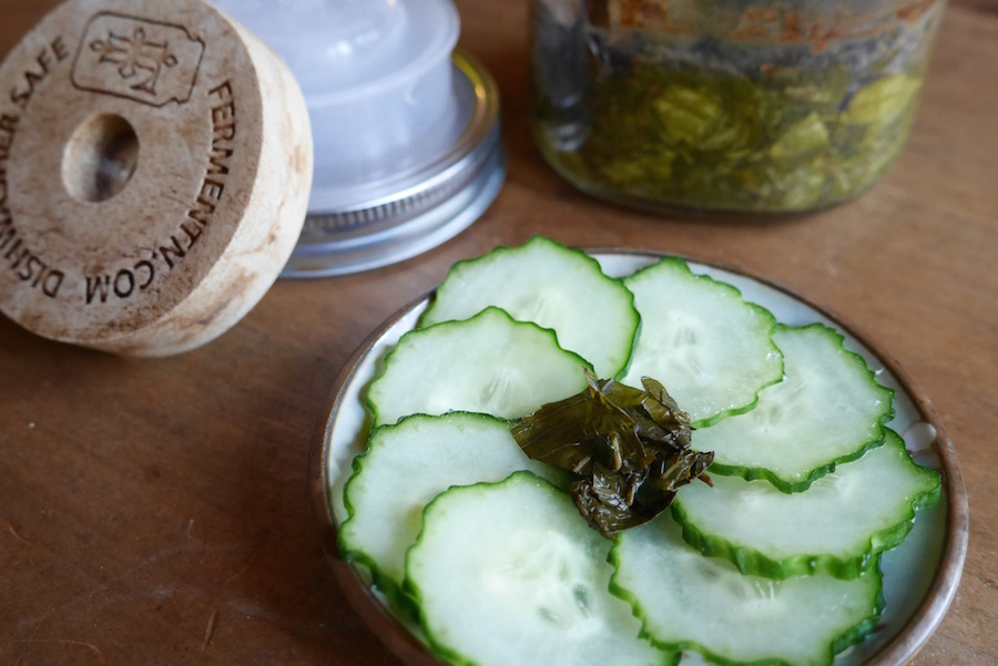 Fermented Mint and Ferment'n Home Fermentation Kit