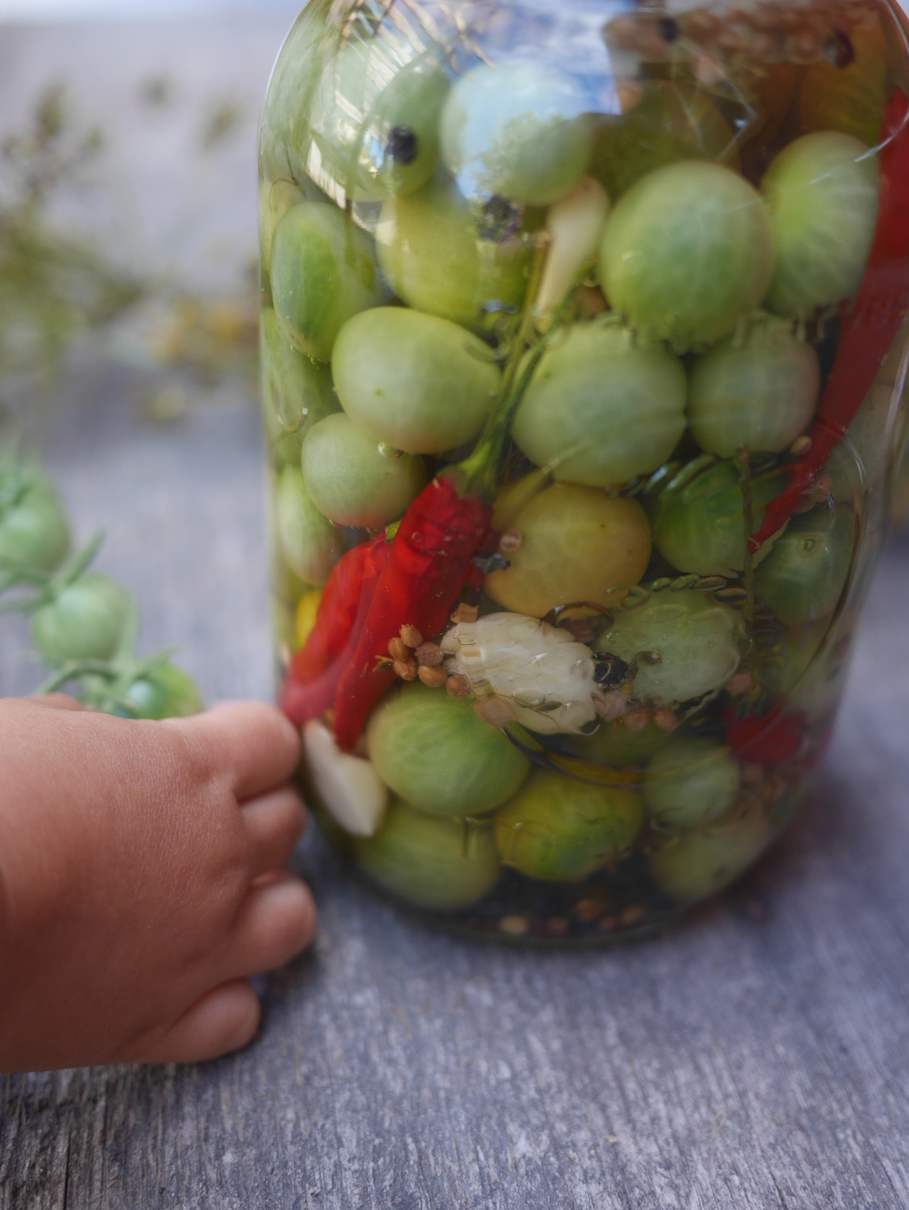 Green Cherry Tomato Pickles Ferment.works