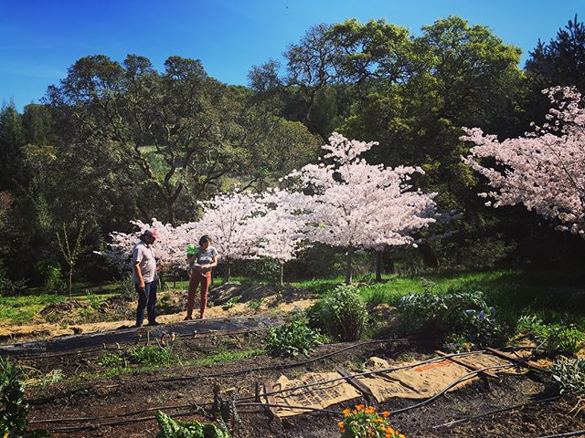 """We hosted a new #airbnbexperience for the first time last weekend! It's called """"Garden Day on the Homestead"""" and it's a fun, educational afternoon in the garden with us! Find the details @airbnb @airbnbexperiences and please help us spread the word! Link in bio.  #airbnb #airbnbhost #gardening #sonoma #sebastopol #homestead #growfood #permaculture #daytrip #foodexperience #farmexperience #smallfarm #farmdog"""