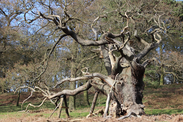 An outstanding collection of veteran & ancient trees