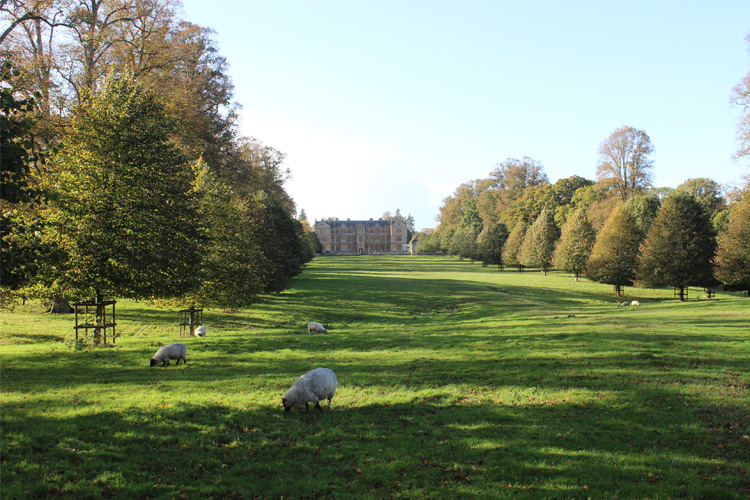 The Lime Avenue framing Montacute House.