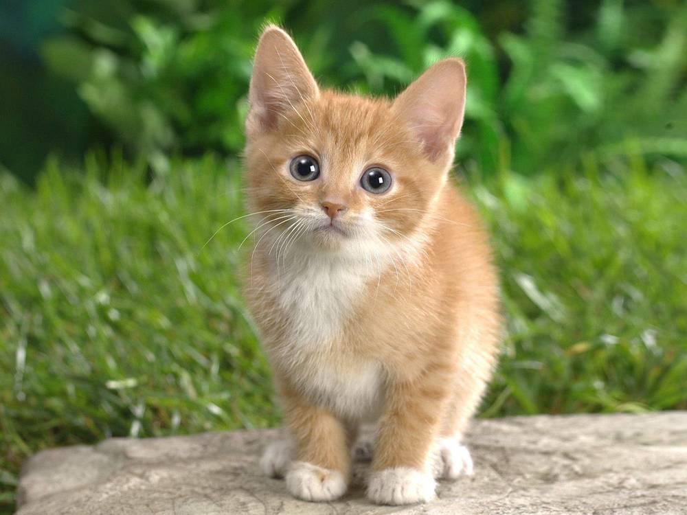 Obligatory Cute Cat. You're Welcome.