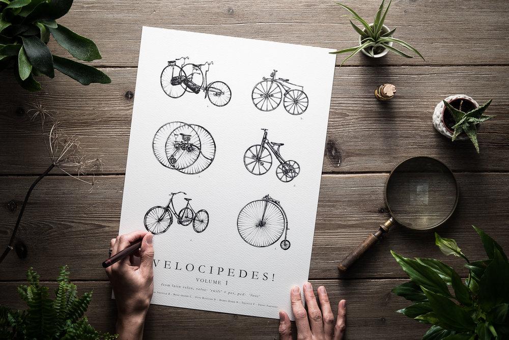 ©nicoleheidaripour_velocipedes_1.jpg