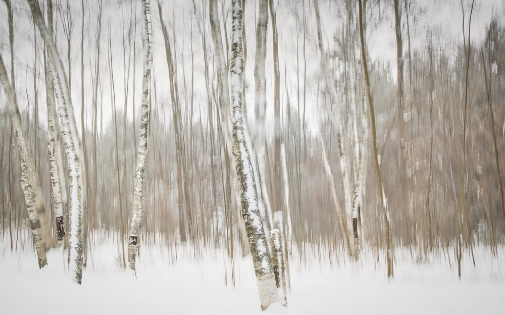 Birch Grove - Jennifer Walton