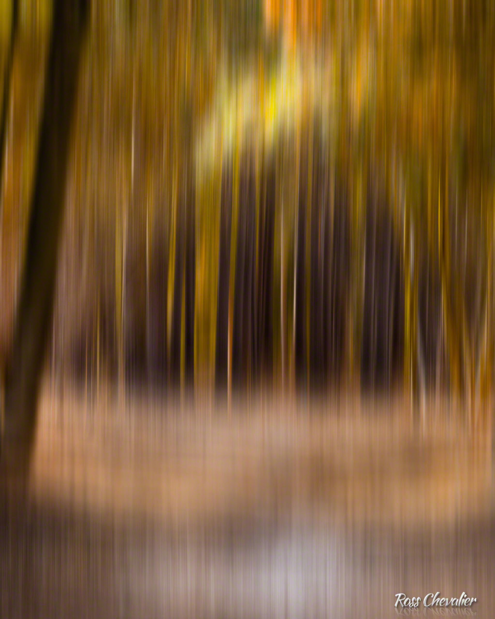 Creative blur is just one of the techniques that we will explore