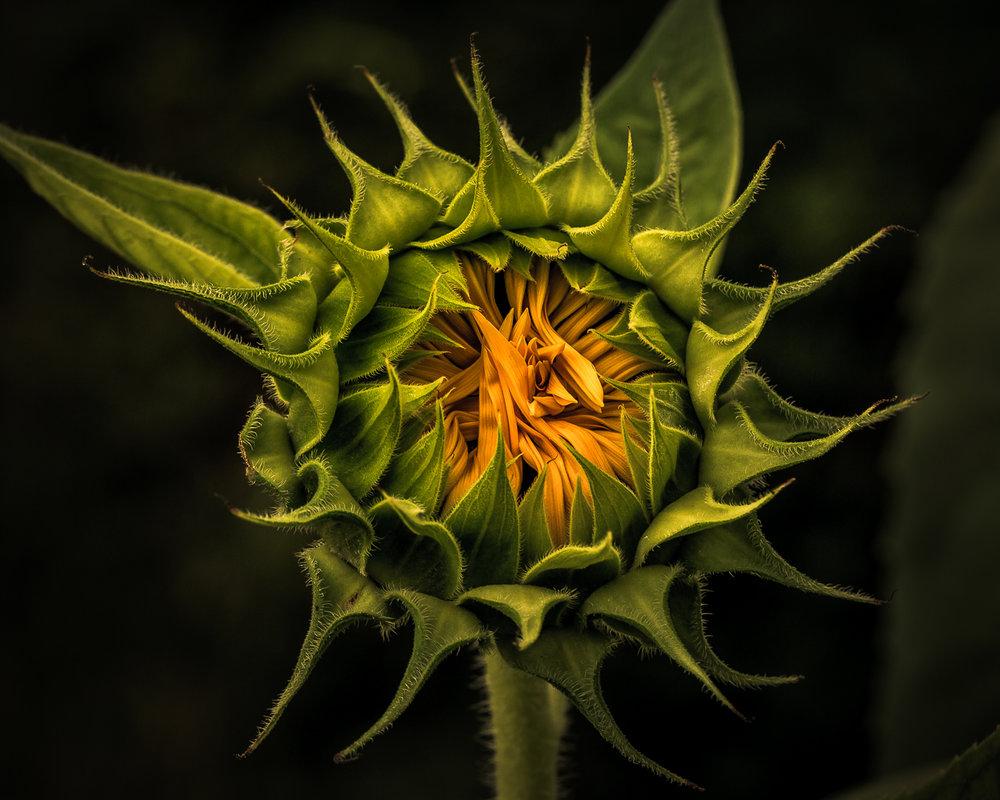 6 KK Sunny Flower-1.jpg