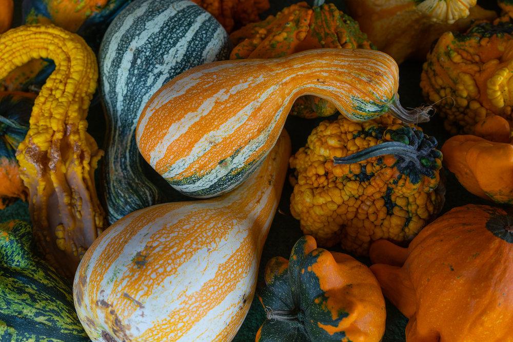 Jeff_Ibbotson Gourd Delight-100.jpg