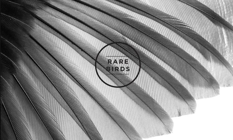 2015-01-30-RC-Case-Study--Rare-Birds_Wings.jpg