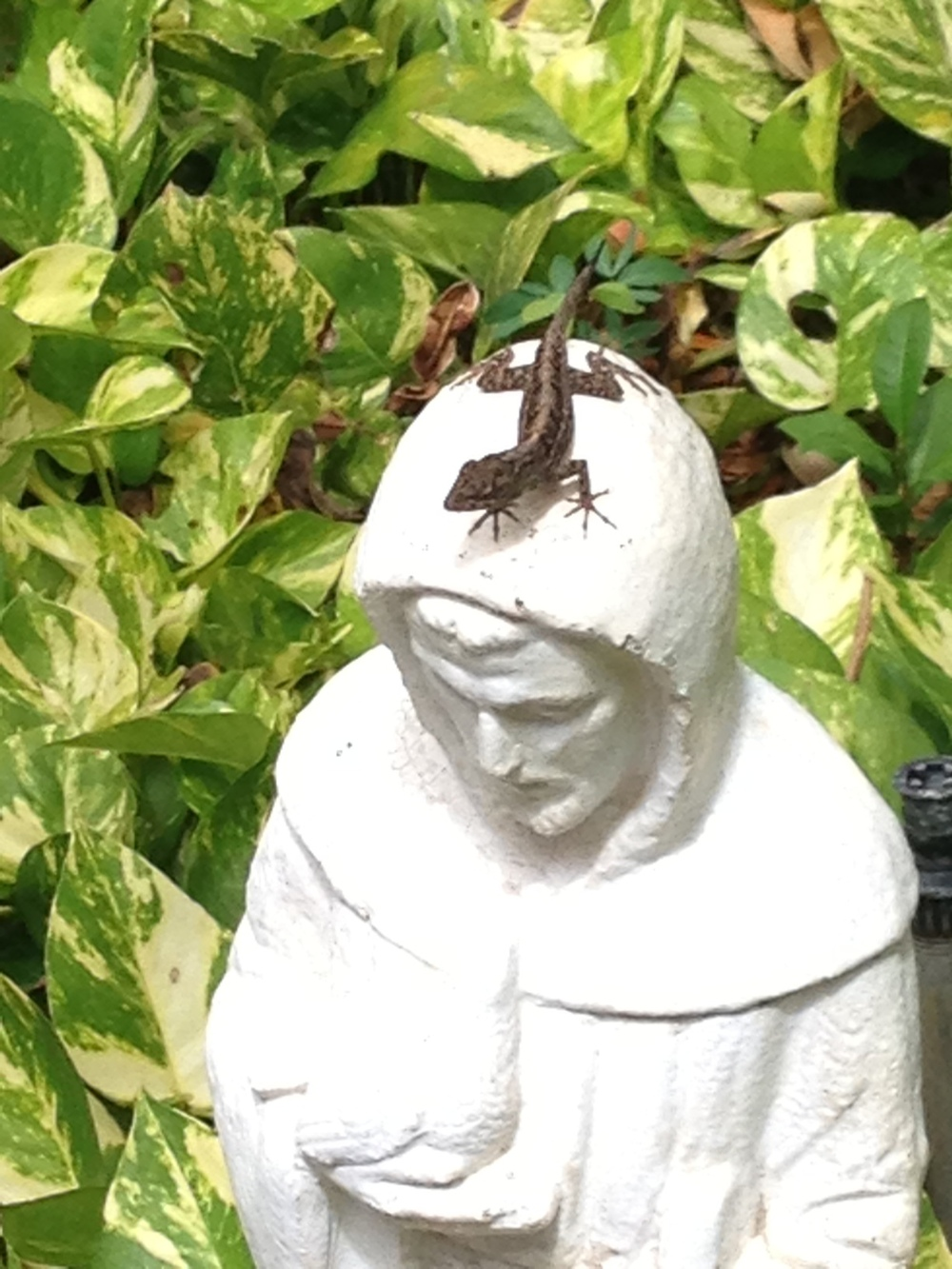 A lizard adorns Francis in the garden