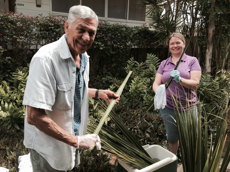 Louie cleaning palms for Palm Sunday