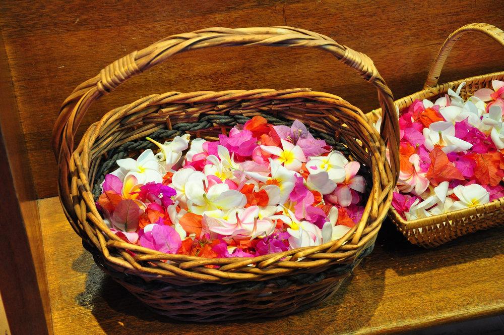 Corpus Christi Flower Petals.jpg