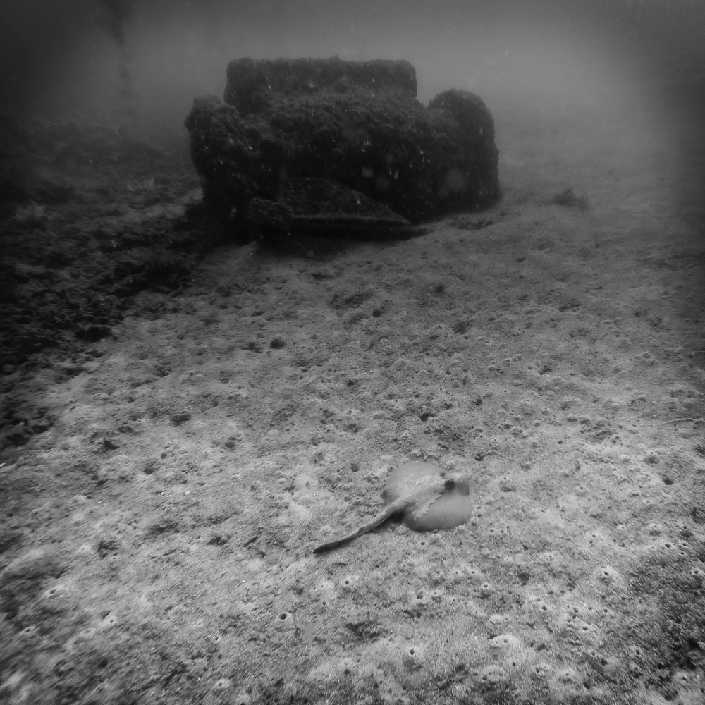A small stingray resting in the ocean floor next to a couch. From my first time shooting underwater with a GoPro Hero 3.