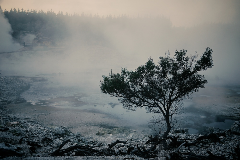 A lone tree survives in the barren terrain near steaming fumaroles of a hot water lakes of sulphur crystals and deposits