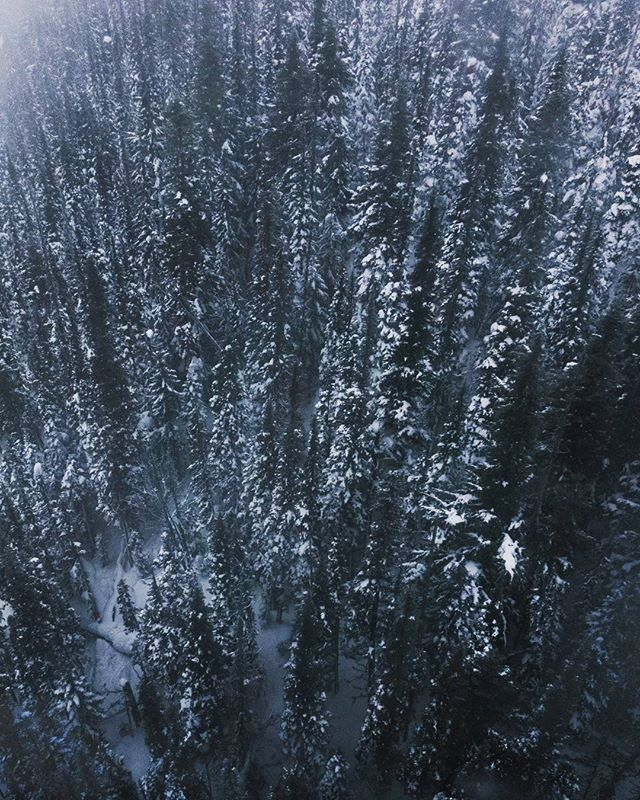 Flying over the trees on New Years eve. 😎  #trees #landscapephotography #snow #forest  #newyearseve #whistler #whistlerblackcomb #cold