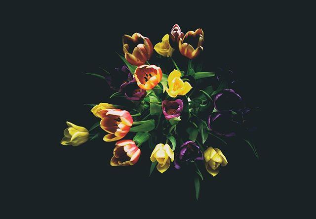 KaBoom! Tulips on Black. - #spring #flowers #amsterdam #tulips #wallart #colour #blackbackground #artyfarty