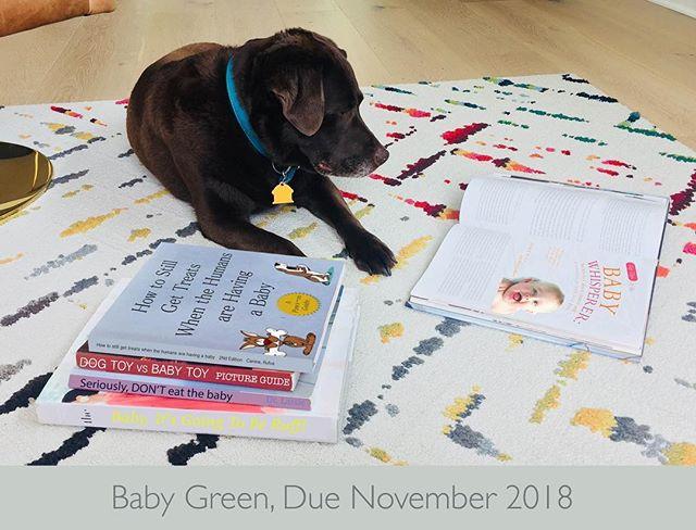 #dogsofinstagram #babynews #wepoppin #thankful #pregnant