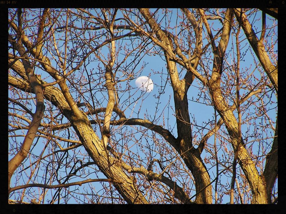 2010.02.25.jpg