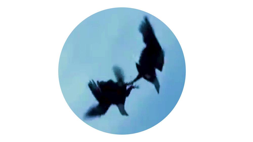 Eagles_02_white.jpg
