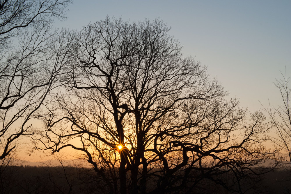 Sunset-Trees.jpg