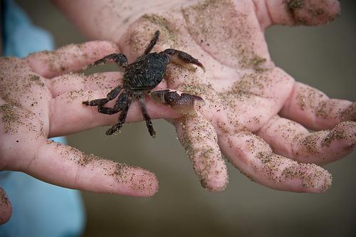 crab.jpg