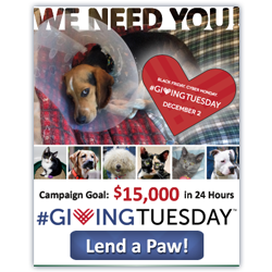 SPCA NOVA Giving Tuesday