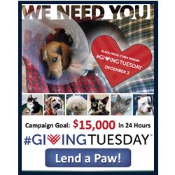 Copy of SPCA NOVA Giving Tuesday