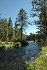 Me and my ridiculous hangover took a trip up to the high desert of Oregon on Saturday. We went to the beautiful Metolius river near a town called Sisters.  Incredibly peaceful, gently flowing through meadows and pine groves also unfortunately incredibly cold. The river is polular with fly fisherman though certainly not because its easy to catch fish there! As ever check out more pictures over at  flickr .    technorati tags: metolius ,  travel ,  usa ,  oregon