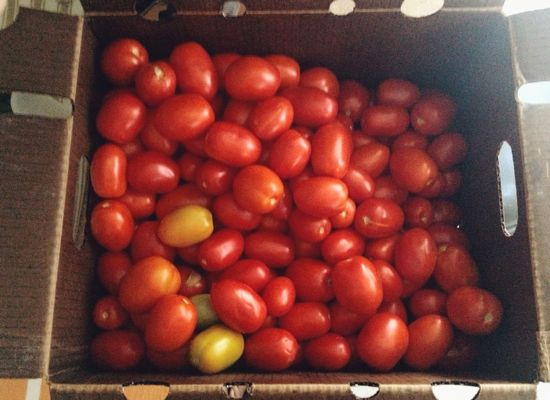 tomatoes4.jpg