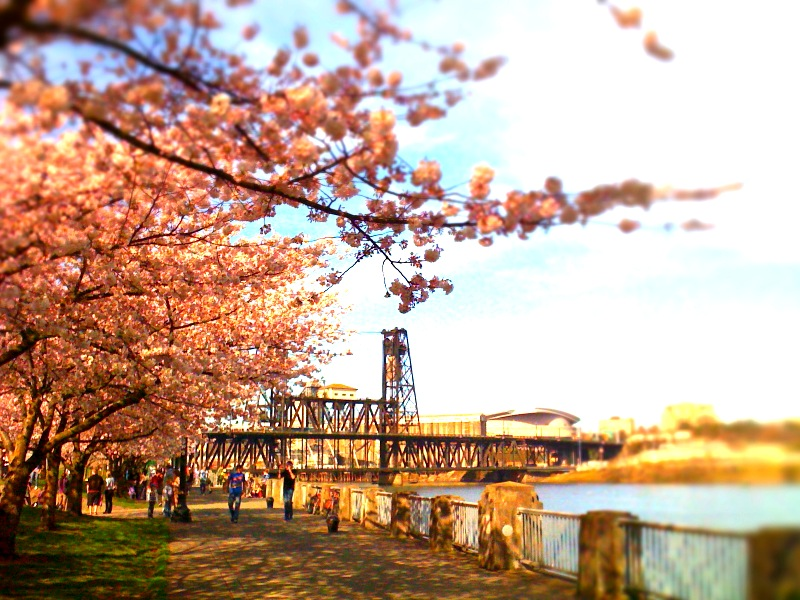 Portland waterfront.JPG
