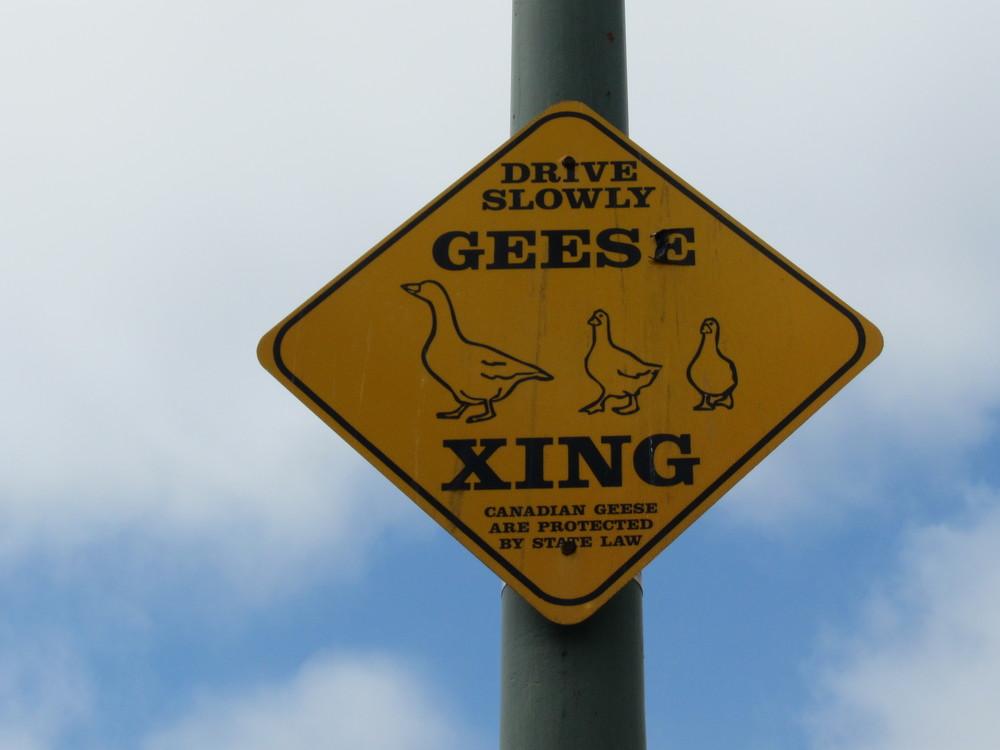 geesecrossing.JPG