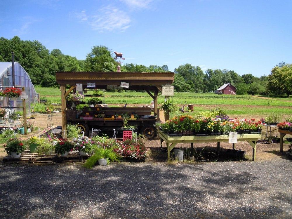 Farm stand Kingsville.jpg