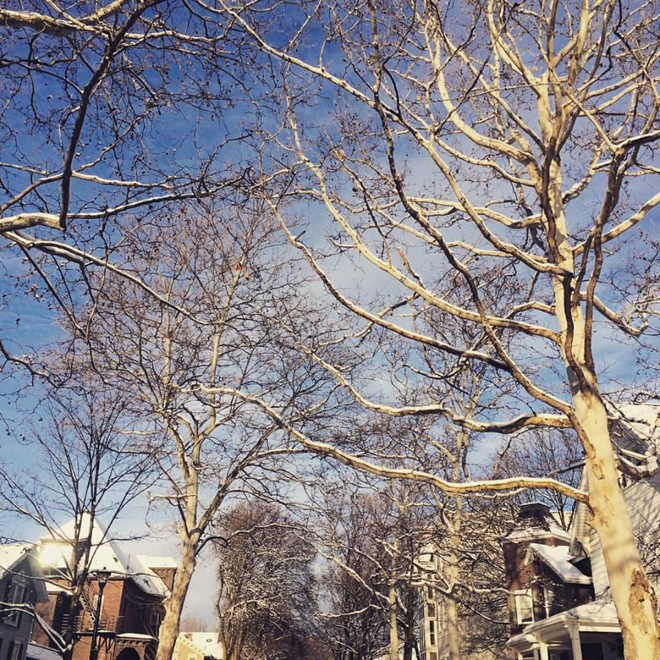 trees-snow.jpg
