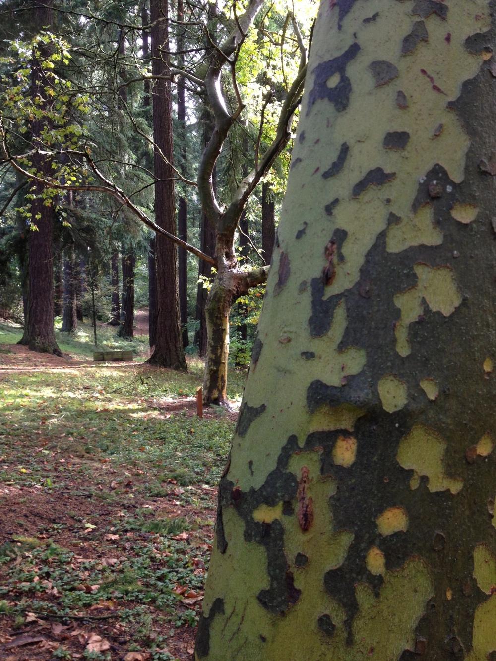 trees at Tabor.JPG