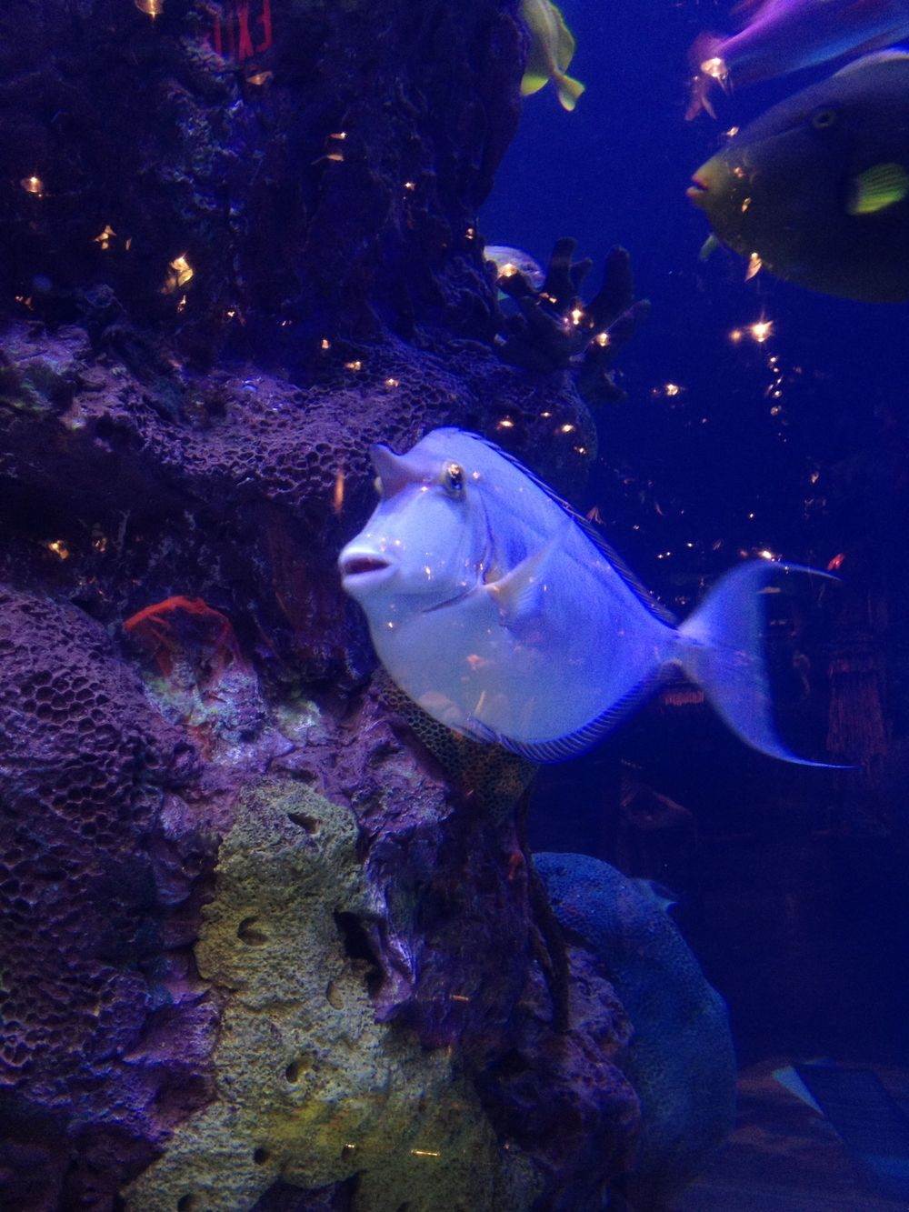 vegas fish.jpg