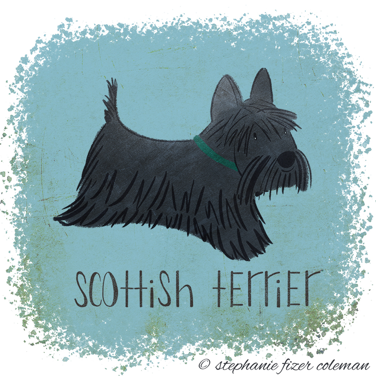 scottish terrier.jpg