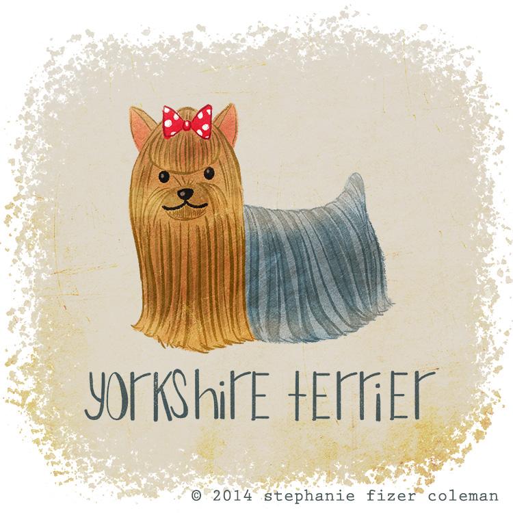 yorkshire terrier.jpg