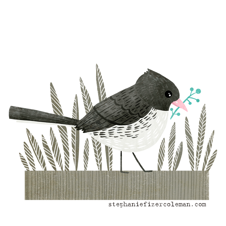 Dark Eyed Junco illustration by Stephanie Fizer Coleman