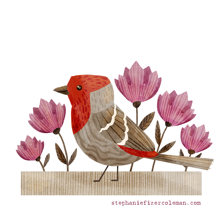 3 house finch progress.jpg