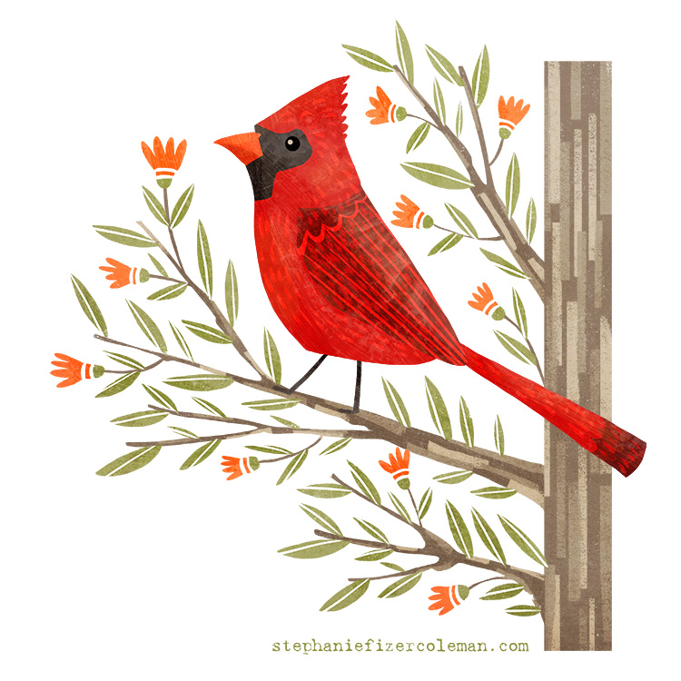 9 cardinal.jpg