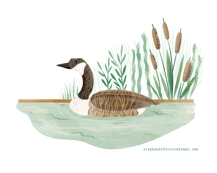 13 canada goose.jpg