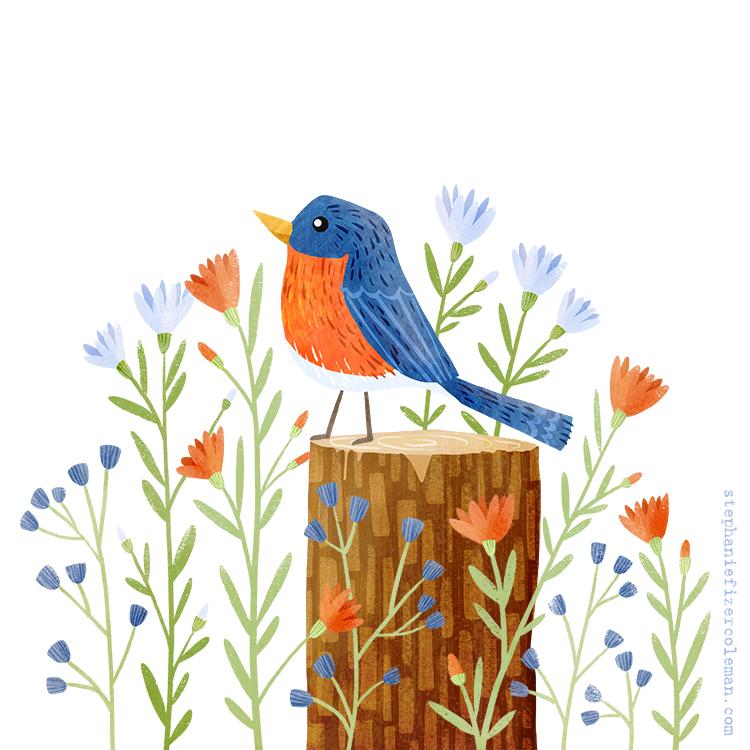 12 eastern bluebird.jpg