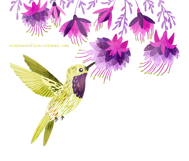 16 lucifer hummingbird.jpg
