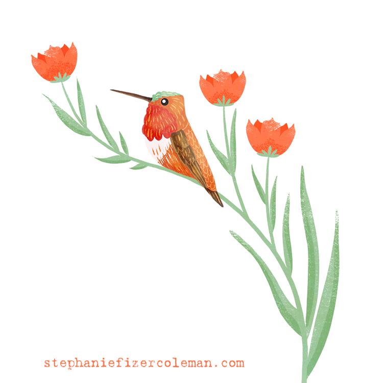 18 rufous hummingbird.jpg