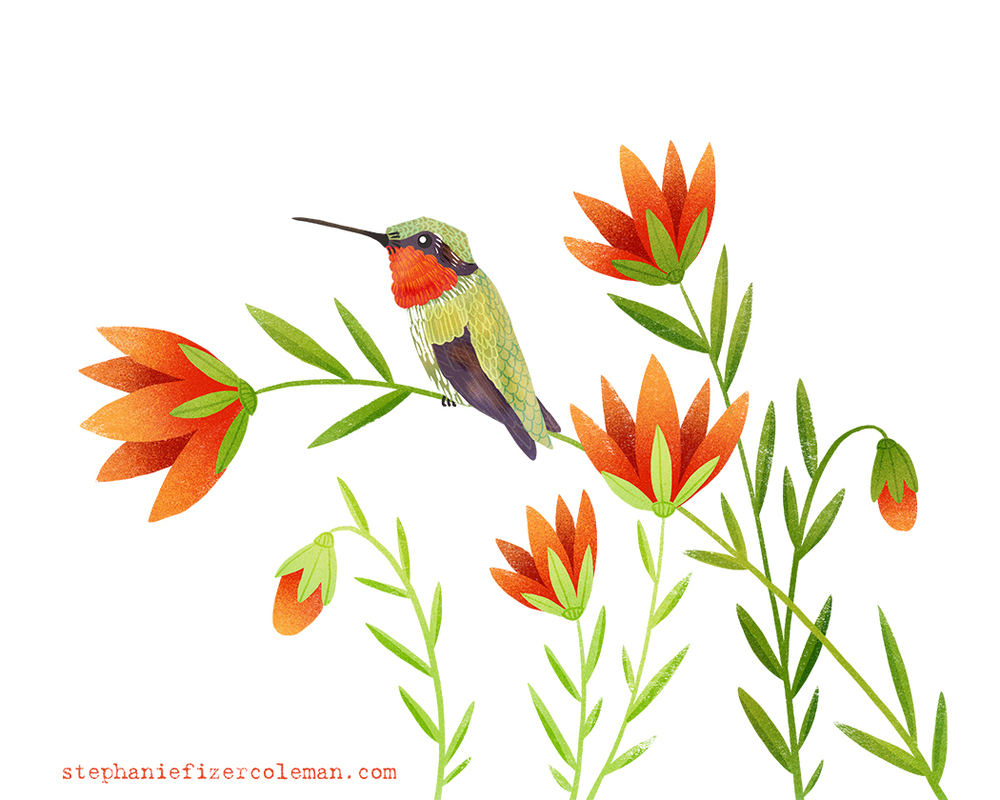 17 ruby throated hummingbird.jpg