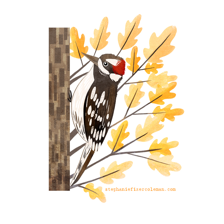 22 downy woodpecker.jpg