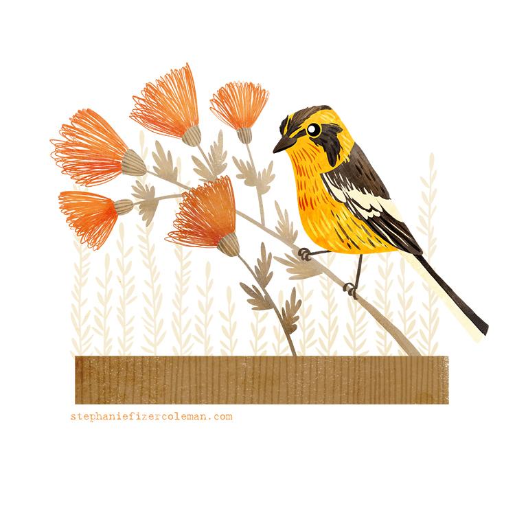 24 blackburnian warbler.jpg