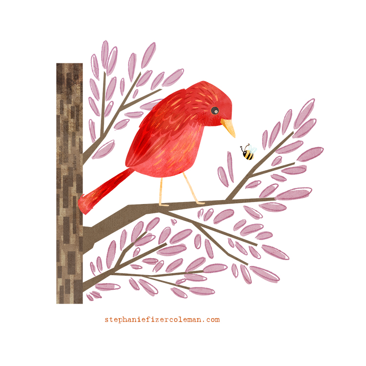 28 summer tanager.jpg