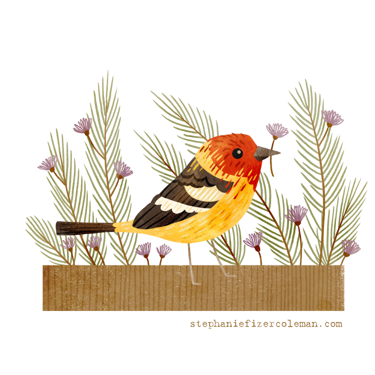 33 western tanager.jpg