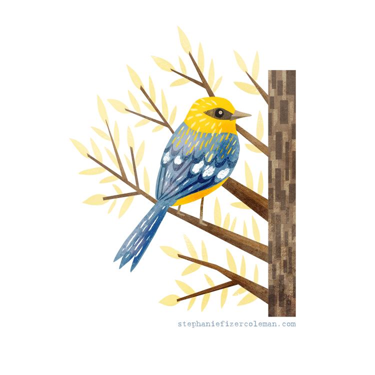 35 blue winged warbler.jpg
