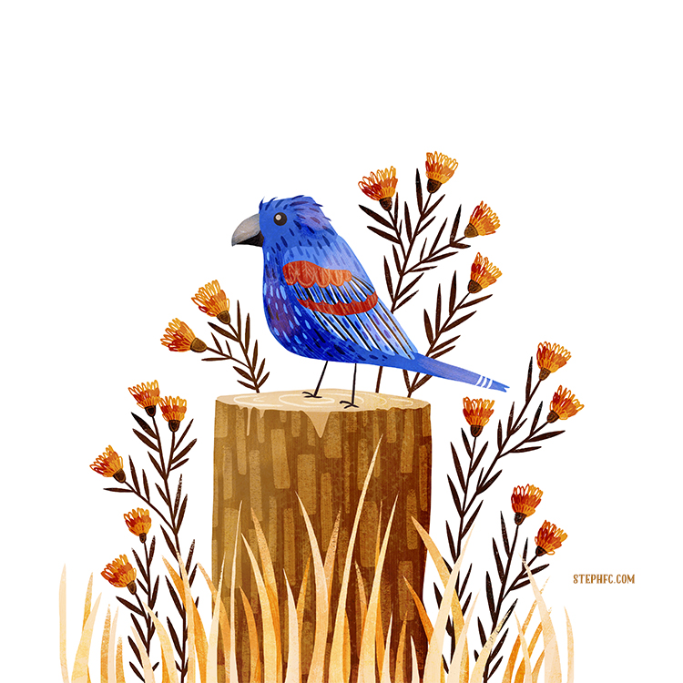 36 blue grosbeak.jpg